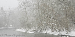 April Showers (travelphotographer2003) Tags: trees winter usa mountain snow green nature ecology beauty squall forest woodland river woods solitude snowstorm scenic panoramic westvirginia serenity serene naturalbeauty freshness refreshment appalachianmountains purity tranquilscene treetrunks troutstream alleghenymountains monongahelanationalforest beautyinnature 12ratio webstercounty williamsriver aprilsnowfall mixedhardwood