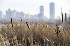 DSC_4812 (kabatskiy) Tags: city urban lake nature landscape spring dump minimal marsh abstracts