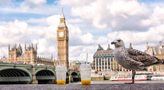 Breakfast in London (cuppyuppycake) Tags: england sky orange bird london thames breakfast river big ben cloudy juice gull drinks