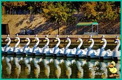 De patos y gaviotas (patosincharco) Tags: parque lago gaviotas patos
