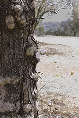 Wooden life (Eloy Moreno) Tags: naturaleza canon arbol campo amateur hdr olivo