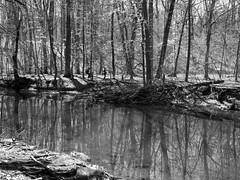 Reflections in the creek (pilechko) Tags: blackandwhite nature monochrome creek reflections outdoors woods pennsylvania newhope bowmanshill