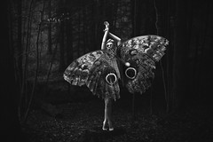 I'm not one of your pinned butterflies.  241/365 (aleah michele) Tags: wild cold forest butterfly insect dead evening blackwhite still pin silent emotion display empty moth free pins adventure explore evergreen 365 concept emotional conceptual delicate chill alluring emerge pinned restrain 365project conceptualportrait pinnedbutterfly aleahmichele aleahmichelephotography pinnedmoth imnotoneofyourpinnedbutterflies