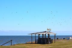 Driftwood Bar (Cyber Drifter) Tags: ocean cliff seagulls canada water birds bar atlantic east edge
