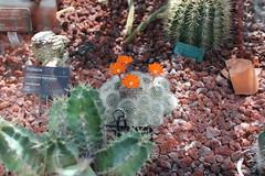IMG_2451 (Mercar) Tags: canada garden botanical montreal jardin greenhouse botanic botaanikaaed qubeck