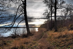 Seaside Path (Jens Haggren) Tags: trees sunset sea sky sun nature water clouds landscape seaside sweden path silhouettes olympus vrmd em1