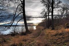 Seaside Path (Jens Haggren) Tags: trees sunset sea sky sun nature water clouds landscape seaside sweden path silhouettes olympus värmdö em1