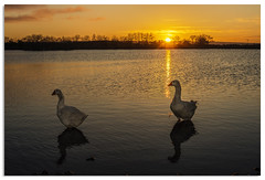 Quackers2 (.Wadders) Tags: water sunrise yorkshire ngc keighley d600 redcartarn nikonfxshowcase