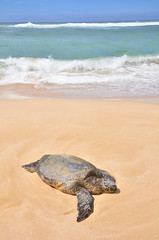 HWI_1075 (Ikuhito) Tags: ocean blue cloud beach hawaii oahu turtle wave northshore honu