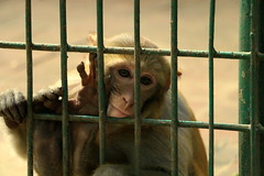 Prison Life - II (Rafee Mizan Khan Chowdhury Niloy) Tags: people nature canon garden botanical zoo wildlife photowalk dhaka mirpur 70d