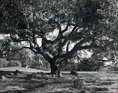 Santa Cruz (westkauai) Tags: california blackandwhite bw santacruz takumar ilford delta400 pentax6x7 75mmlens