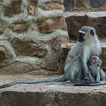 Mother and kid on Picnic site thumbnail