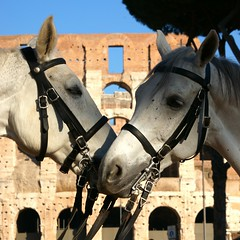 Horses at the Colosseum (Carlos Lubina) Tags: horses rome roma caballos colosseum pferde colosseo 7dwf