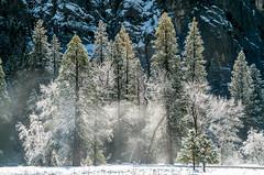Yosemite Winter Fine Art Landscapes! Sony A7RII yosemite National Park Winter Snow! Dr. Elliot McGucken Fine Art Landscape Photography!  Ansel Adams & John Muir Tribute! (45SURF Hero's Odyssey Mythology Landscapes & Godde) Tags: nature fineart el yosemite dome half a7 johnmuir anseladams fineartphotography capitan naturephotography sonnar wideanglelens naturephotos tfe fineartphotos a7r fineartphotographer fineartnature fineartlandscapephotography sonya7 elliotmcgucken sonya7r elliotmcguckenphotography elliotmcguckenfineart sonya7rii a7rii a7r2 55mmf18zalens sonya7r2malibufineartlandscapessunsetssonya7riisony1635mmvariotessartfef4zaossemountlensdrelliotmcguckenfineartphotographywideangle sonya7r2 masterfineartphotography