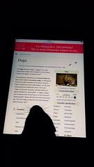 Degucation (Jonas ileika) Tags: birthday animal reading rodent education 15 wikipedia years degu wiki encyclopedia degus ipad sniffy