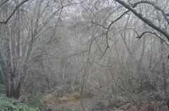 Alder and Willow (brian dean bollman) Tags: sonomacounty riparian springlake santarosaca