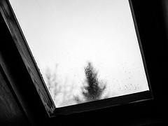 The weather... (Janine4d) Tags: roof blackandwhite tree window wet monochrome rain drops blurry panasonic attic raindrops 20mm pane g3