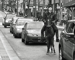 Portland's One Horse (Ian Sane) Tags: street camera horse white man black southwest cars oregon canon portland lens ian photography eos one is downtown candid images 7d usm yamhill sane in horse traffic ef100400mm f4556l stuck portlands
