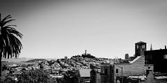 IMG_0310 (1) (EMG_Photography_) Tags: sanfrancisco city travel vacation sky blackandwhite usa holiday monochrome beautiful skyline architecture landscape cityscape peace creative palm