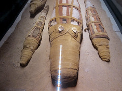 Kom Ombo Crocodile Mummy (shaire productions) Tags: world old travel art history animal temple photo image alligator egypt picture culture science photograph egyptian crocodile horror mummy creature mythology mummies cultural ancientegypt scientific komombo mummified mummycrocodiles