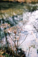 Winter Walk on Film (Ruthie H) Tags: winter fuji pentax fim analogue mesuper pentaxa