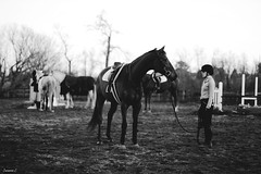 (suzcphotography) Tags: horses horse monochrome canon 50mm pony jumper hunter equestrian thoroughbred equine t3i