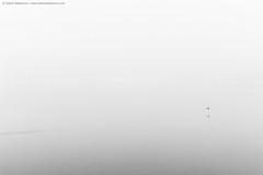 ...and away (TalesOfAldebaran) Tags: winter blackandwhite bw mist bird fog canon river landscape flying serbia zima sava waterscape srbija reka sabac ptica magla pejzaz 700d klenak