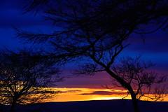 285/365 Multicoloured dawn (images@twiston) Tags: morning pink blue trees winter sky orange tree silhouette yellow sunrise landscape dawn branch break branches silhouettes multicoloured lancashire east 365 colourful eastern silhouetted wheatheadlane