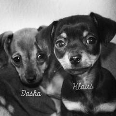 Dasha & Klaus