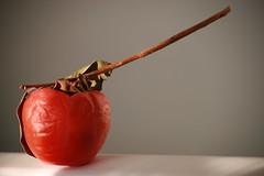 fruit of winter (SergioBarbieri) Tags: ramo frutta giardino cachi caco pianta biologico