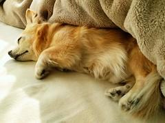 flickr 犬 動物 eyefi eyeficloud googlenexus6p (Photo: takuhitofujita on Flickr)
