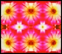 Flower mandala (larry_shone) Tags: pink cactus flower digital mandala picsart