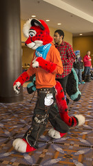 DSC_0579 (Acrufox) Tags: midwest furfest 2014 furry convention december hyatt regency ohare rosemont chicago illinois acrufox fursuit fursuiting mff2014