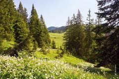 der Sommer (welenna) Tags: flowers summer mountain mountains alps forest landscape switzerland view berge alpen blume wald kantonfribourg