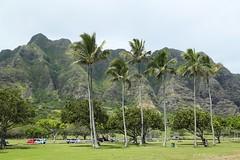 03032016_006_ (ALOHA de HAWAII) Tags: hawaii oahu kualoaregionalpark kualoarangepamtrees