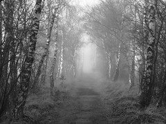 passing joys (vertblu) Tags: wood autumn bw mist misty fog forest woodland mono woods moody hamburg foggy birchwood pathway naturepreserve birches birchtrees naturschutzgebiet hamburggermany woodpath duvenstedterbrook preservationarea naturesgallery openwoodland fogandmist cmwdbw openforest preservearea nsgduvenstedterbrook vertblu