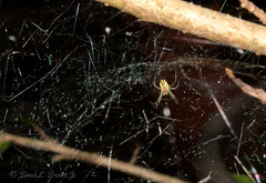 Spiders (jb5860) Tags: artisticphotos bestartistic jb5860