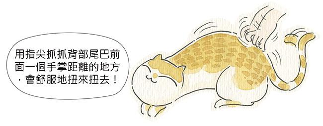 家裡來了一隻貓 貓的敏感帶