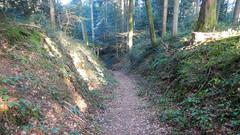 Hohlweg St.Urban (ponte1112) Tags: forest schweiz switzerland nikon europa suisse che bume weg pfad historisch forst nikonshooter myswitzerland nikonuser nikonlover s9600 nikonschweiz viewnxi