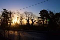 rising energy (thatgirlwiththekicks) Tags: road county morning blue trees ireland light dublin orange sun silhouette sunrise dawn golden country north