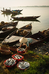 Unloading the Catch in Hoi An, Vietnam (gazrad) Tags: travel woman fish colour vertical work asian outdoors boat photo asia southeastasia basket market traditional scenic bank canoe vietnam hoian seafood wicker tranquil unload occupation plentiful unrecognisable