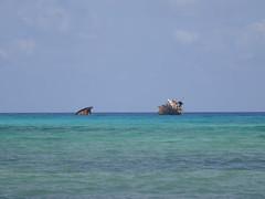 Encallado (Paola.Pinilla.C) Tags: mar san colombia playa isla andrs paraso calor brisa tropico decameron archipilago isleo
