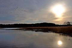 DSCF4476 (Peter Ghita) Tags: lake landscape spring seasons sweden tyres fujinonxf1855mmf284rlmois fujifilmxt1