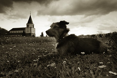 I love my dog life ;-)) (boomer_phil) Tags: sky bw dog chien church nature animal nikon respect outdoor ciel amour eglise fidle d7100