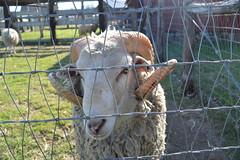 Nash Farm Grapevine Texas. (People, Places & Things) Tags: texas grapevine nashfarm