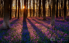 Micheldever - Sunrise (Christopher Pope Photography) Tags: trees bluebells sunrise woods hampshire starbust micheldever