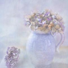Pot in the window (BirgittaSjostedt.) Tags: light plant flower texture still paint pastel indoor pot brushes highkey hydrangea ie magicunicornverybest birgittasjostedt