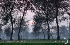 Sunset  <3 (SalmanFalcons) Tags: pakistan sunset sky freedom flying foggy cityofeagles