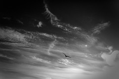 (bendikjohan) Tags: sky bw cloud white black oslo norway clouds blw fuji cloudy 1600 fujifilm neopan bnw bl