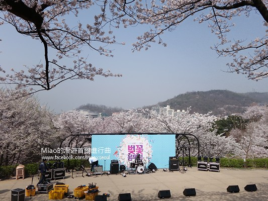 안산공원벚꽃08
